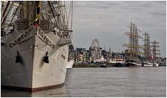 The Tall Ships Races (Eric@focus) Tags: dockbay tallshipsraces2016 tallship zeereus antwerp mast rigging quay river schelde mooring 1000v40f dockexcellence