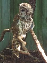 DSCF0224 (Stonehenge 68) Tags: zoo birmingham snake alabama lizard plantation antebellum birminghamzoo arlingtonhouse