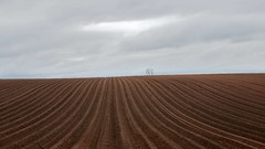 Ploughed (wetbicycleclappersoup) Tags: