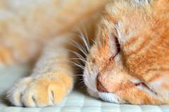 /  Japanese Tabby Cat  to live in the cabin of the field work (Dakiny) Tags: field animal animals june japan cat mammal tabby yokohama     rainyseason tabbycat   japanesecat  2013     petanimal aobaku    2013   shimoyamotocho  yanimotoseseragifureaipromenade