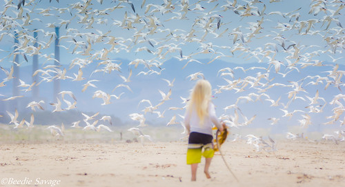 Kids and Terns