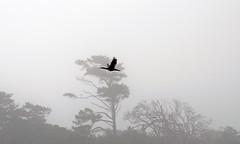 (DarrenBaileyLRPS) Tags: bird birds flying geese duck swan pigeon wildlife owl crow waterfowl avian jackdaw dbailey