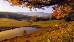 Cattle reflected in a pond near Woodstock, Vermont, USA (aleksing45) Tags:
