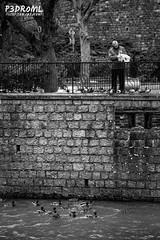 Migas de pan ' (Pedro Martínez López) Tags: bridge people bw naturaleza white black byn blanco architecture río river y prague negro praha praga bn contraste animales baw karlovy vary