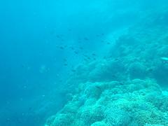 Snorkeling à Pemuteran (Bali) (thiery49) Tags: sea summer bali mer west indonesia snorkel dive snorkeling mangrove snorkelling tuba été indonesian plongée balinese indonésie ouest balinais indonésien