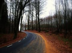 The story of November (Marie Granelli) Tags: road november autumn tree skne sweden explore sdersltt d3000