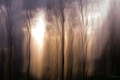 Coeur de lumire (Pakalou44) Tags: trees sunset blur soleil heart coucher coeur arbres icm flou
