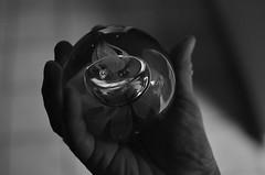 """Rosebud..."" (MPnormaleye) Tags: bw abstract detail macro glass monochrome closeup 35mm photography weird globe shadows hand arts textures utata noise greyscale bwmonochrome utata:project=ip187"