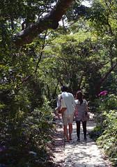 斎場御嶽 歩くひとたち Nanjo-si, Okinawa (ymtrx79g ( Activity stop)) Tags: street plant color slr film japan analog nikon kodak 35mmfilm okinawa 135 沖縄 植物 kodakgold100 街 写真 銀塩 フィルム nikonnewfm2 南城市 nikonainikkor50mmf14 歩行走行 walkandrun 201310blog nanjosi
