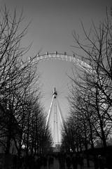 London Eye (Dan Carter 1993) Tags: city trees england people white black london eye thames capital line southbank symetrical