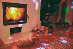 Arpagic (bortescristian) Tags: christmas family portrait house colour slr girl digital cat canon photography eos rebel photo kid spring kiss december foto fotografie child play picture romania imagine cristian decembrie cluj roumanie craciun poza primavara 500d clours pisica 2013 ciurila bortes bortescristian cristianbortes x3l t1i