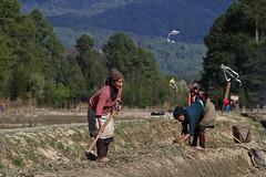 Life in the ricefields of Ziro. Arunachal Pradesh, NE India (NeSlaB .) Tags: poverty old travel portrait woman india kite look canon nose photo women asia village traditional culture photojournalism tribal clothes ornaments tradition tribe society ricefields developingcountries reportage nationalgeographic ethnography ethnology neindia arunachalpradesh ziro ethnies apatani noseplugs neslab
