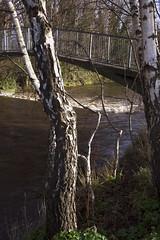 IMG_8866b350D (Wendy:) Tags: bridge river 350d january kitlens treebark highwater dodder spate