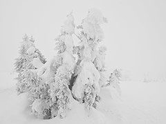 Spruce Whiteout (Espen Vestre) Tags: snow norway spruce whiteout