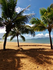 Magnetic Views: The Strand, Townsville, QLD (John.Johnson.15) Tags: vacation reflection tree sexy feet beach strand relax fun island gold coast amazing perfect soft shadows shot time shots good sandy grain picture australia palm shade queensland tropical northern tropics magnetic townsville pallerenda