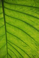 leaf (ladywolke) Tags: light green licht leaf bonn grn blatt botanischergartenbonn