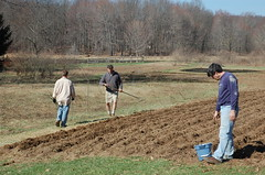 "Grains Coop Work Morning: Planting Oats <a style=""margin-left:10px; font-size:0.8em;"" href=""http://www.flickr.com/photos/91915217@N00/13943185355/"" target=""_blank"">@flickr</a>"