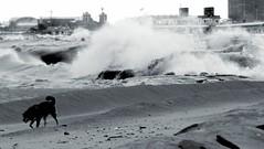 never mind the waves (Alex Szymanek) Tags: bw dog lake chicago beach silhouette canon walking one illinois waves alone open walk il shore february 70200 markii hardlight
