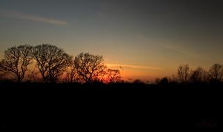 Treeline Silhouette; Sunset (EXPLORED)
