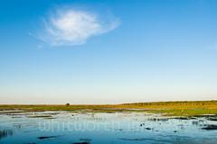 Fogg Dam (whitworth images) Tags: green heron nature wet water birds landscape outdoors view nt scenic large australia waterbird scene tropical aquatic lush habitat egret tropics wetland northernterritory expansive foggdam