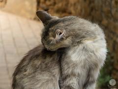 Prs du bassin aux anguilles (paul sudris) Tags: voyage animal chat fuji morocco maroc fujifilm extrieur x20 rabat bassin flin pelage errant anguilles