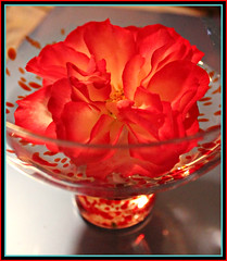 Floating Red Rose (bigbrowneyez) Tags: red flower art nature water glass beautiful rose garden ruffles fun petals pretty foto bright gorgeous redrose creative rosa floating natura romance precious frame romantic bella colourful transparent lovely colori delightful cornice freckled bellissima frommygarden floa redrosefloating