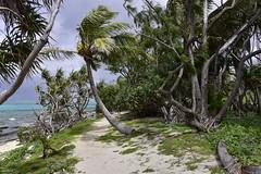 Island path (D70) Tags: ocean island surf pacific path palm reef vanuatu mysteryisland