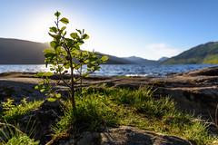 Little tree (GDDigitalArt) Tags: nature sunshine rural scotland daylight outdoor hiking benlomond lochlomond
