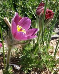 Spring Flowers (m.gifford) Tags: parliament parliamenthill centreblock