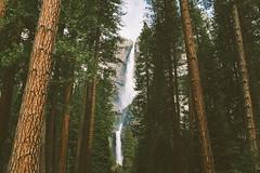 (Randy P. Martin) Tags: yosemitefalls waterfall falls yosemite yosemitenationalpark findyourpark