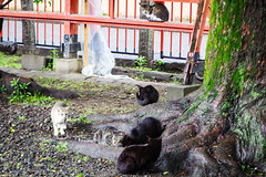 Today's Cat@2016-05-11 (masatsu) Tags: cat pentax catspotting mx1 thebiggestgroupwithonlycats