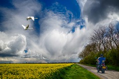 Free bird (bainebiker) Tags: swans motorcycle transport sky clouds fields road crops agriculture farmland hdr canonef24mmf14liiusm freedom marketdeeping lincolnshire uk