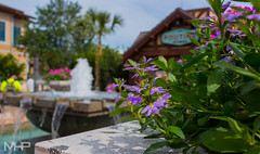 Fountain, Flowers, and Poutine (rcpromike) Tags: flowers fountain mall orlando florida sony disney disneyworld wdw waltdisneyworld towncenter sonyalpha sonya65 disneysprings
