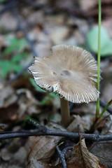 20160606175250_IMG_1979 (arielandrew) Tags: glenlyon woods outdoor exploring mushroom canon eos 750d rebel t6i