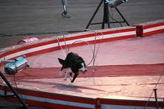 (Brynn Thorssen) Tags: al colorado circus performance may jordan springs co 18 2012 bigtop may18 kaly jordancircus alkalycircus