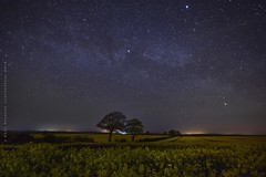 Fields of gold under the Milky Way (Gary Pearson Photography) Tags: way norfolk rape fields milky ringstead oilseed