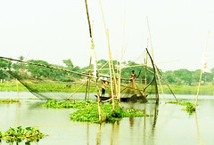 Fishing at Ichhamati Valley (Protikz Flikz) Tags: bangladesh bangladeshriver bangladeshwaterbody bangladeshwetland bangladeshi munshiganj ichhamati fish fisherman fishing