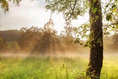 ray (Rainer Schund) Tags: light nature fog forest landscape three nikon ray nebel natur landschaft baum lightrays hagel ilmenau langewiesen nikond700 naturemasterclass natureexploring