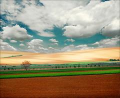 Tenderness (Katarina 2353) Tags: film landscape spring nikon photopainting katarinastefanovic katarina2353 serbiainspired