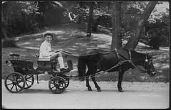 Archiv E815 Junge in Ponykutsche, Zoo, Budapest, 1930er (Hans-Michael Tappen) Tags: archivhansmichaeltappen budapest ungarn kutsche ponykutscher ponykutsche peitsche kleidung ouftit mode schuhe outdoor fotorahmen 1930er 1930s pony hut hat zoo
