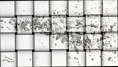 2016-06-20_03-42-42 (Reza Ganjehi) Tags: waterdrops depthoffield closeup abstract serene texture droplet manualfocus dof waterdroplet wasser wassertropfen gotas explore intrestingshot