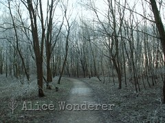 Park in winter (Alice_Wonderer) Tags: park trees winter cold forest bomen pad trail lonely bos koud eenzaam