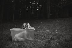 32  100   Hillbilly bathtub (trois petits oiseaux) Tags: bath outdoor kids country swim tub plastic