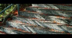 licht und schatten. (Jukai The Pilgrim) Tags: world road city flowers blue light shadow red orange plants naturaleza sun sunlight flower green nature colors landscape hongkong grey licht flora colours outdoor earth path sony country royal peaceful national cinematic flamboyant schatten regia poinciana delonix mirrorless a6000 cloudsstormssunsetssunrises selp18105g ilce6000