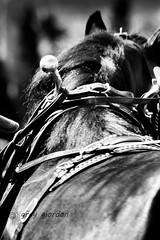 IMG_2462 (deengraygiordan) Tags: bw horse draft