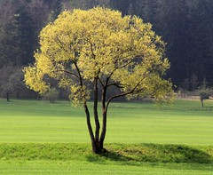 (Linda6769 (OFF)) Tags: germany village thuringia willowtree harras