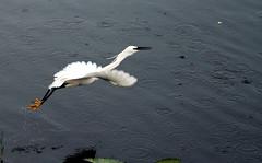 Flight (Midhun Manmadhan) Tags: park andhra pradesh vivekananda kakinada