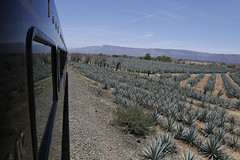 Traveling the Tequila Agave landscape by train (Hugo Ortuo Surez) Tags: travel blue tourism rio azul ruta mxico train landscape mexico tren landscapes grande industrial factory jose jalisco paisaje tourist tequila unesco traveller company route mexican drinks alcohol campo agave tradition mundial antonio region turismo distillery industria jos campos cultural fabrica compaia distribution exporter cuervo turistas bebida tradicin ferrocarriles founded ferrocarril fbrica bebidas distribucin humanidad distribuidor patrimonio compaa distribucion botellas destileria ferromex hectreas hectares fundado agavero exportar destilera tequilera hectareas rojena exportador toneladas rojea