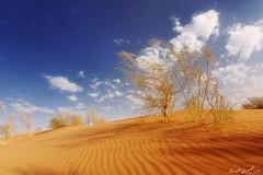 ( ibrahim) Tags: sea sky sun nature stone clouds sunrise canon landscape photography eos desert tokina camel drought sands  ibrahim abdullah hilux  qassim        50d       canon50d altamimi   alyahya              almethnab