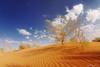(© ibrahim) Tags: sea sky sun nature stone clouds sunrise canon landscape photography eos desert tokina camel drought sands شمس ibrahim abdullah hilux عبدالله qassim ابراهيم تصوير مطر راعي غيوم صحراء شروق 50d الشمس رمال طبيعه الغيوم كانون التميمي canon50d altamimi جفاف هايلكس alyahya القصيم نفود ارطى المذنب النفود مزون ساكنه الغضا طرثوث الوسم لاندسكيب اليحيى مزن almethnab توكينا المربعانية غضا صعافيق سبط حياهـ السبط